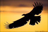 "Carried on the Eagle""s Wins of Christ Ahnsahnghong"