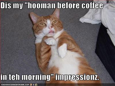 http://bp1.blogger.com/_tEPnUfb_xEc/R_ao4Xb8aBI/AAAAAAAAAUg/YYktAGJpfkM/s400/funny-pictures-orange-cat-human-impression.jpg