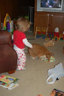 Yea!  Play, Ollie, play!