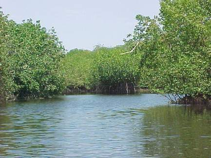 Laguna de Cabildo