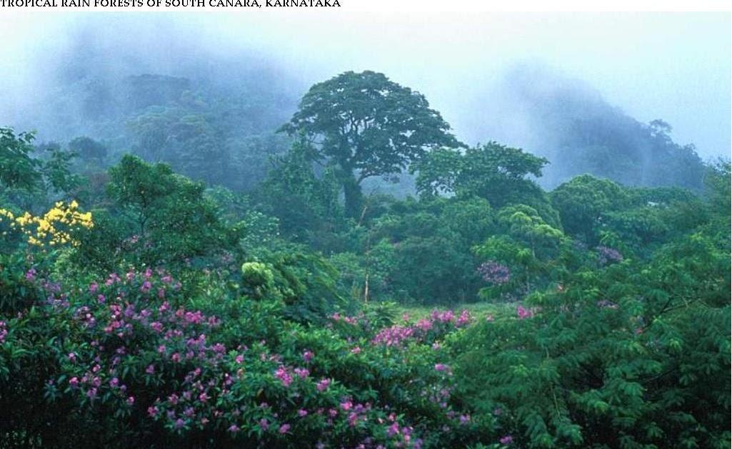 biodiversity rainforest - photo #43