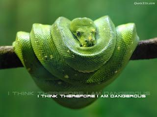 snakeclose - New Types snake