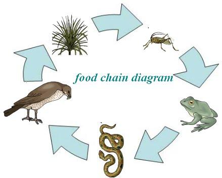 Savanna Animal Food Chain Diagram Rebuild Tecumseh Carburetor Simple Forest Web Great Installation Of Wiring Physics Impact Bangle Tiger Interaction Webs