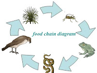 Food Chain Diagram