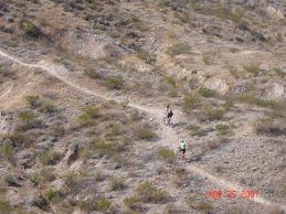 perro 1  en la carrera invernal delicias 2007