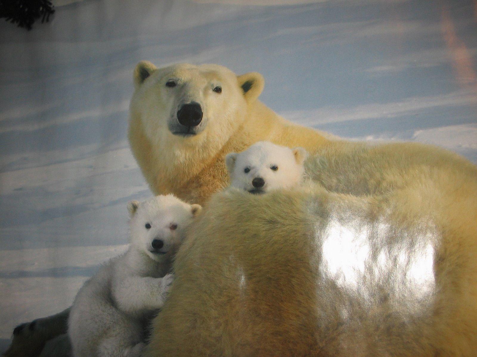 [isbjörn+007.jpg]