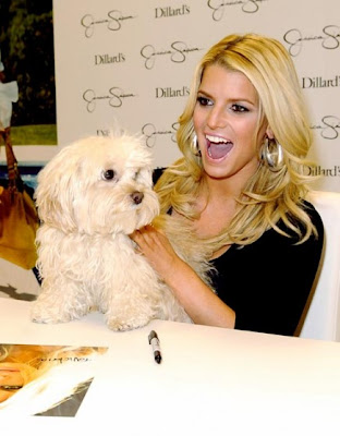 Jessica Simpson Dog Missing photos