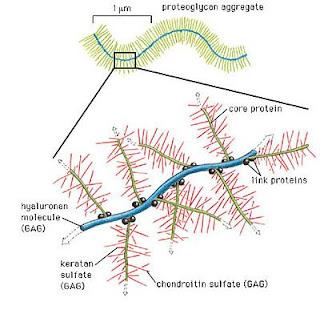 biofreaks biochemistry blog vbeta biochemistry exams