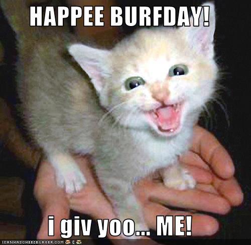 https://1.bp.blogspot.com/_tUTLW2kBH54/TQWzNHldrII/AAAAAAAAAZo/Sz6Awk3R9DM/s1600/funny-pictures-kitten-is-your-birthday-present.jpg