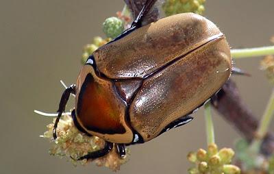 hintergrundbilder und fotos aus afrika insekten kostenlos hier downloaden desktop. Black Bedroom Furniture Sets. Home Design Ideas