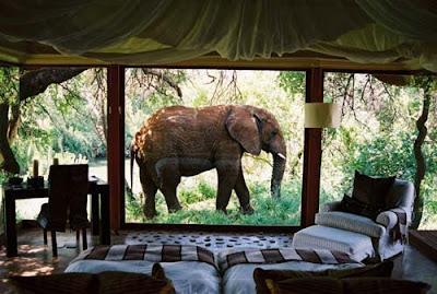 suosikkien lisääminen safari