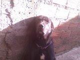 minha cachorrinha penéllopy