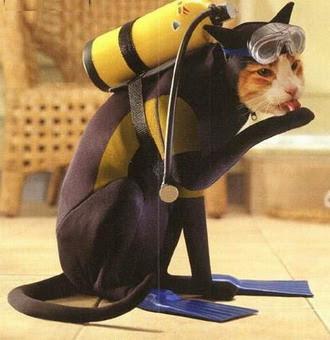 Cat in scuba suit, licking itself.