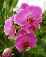 An orchid.