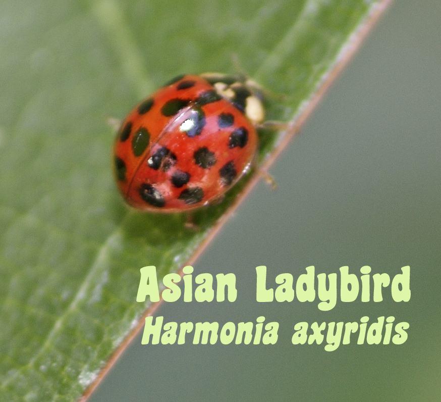 [spotted+ladybug.jpg]