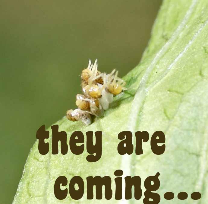 [ladybugs+really+hatching.jpg]