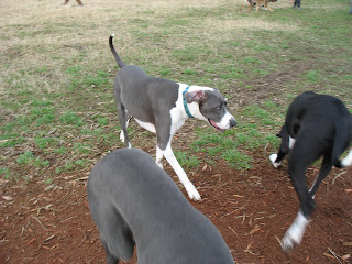 Pet Adventures Stampys Butt And A Good Looking Great Dane At Marymoor
