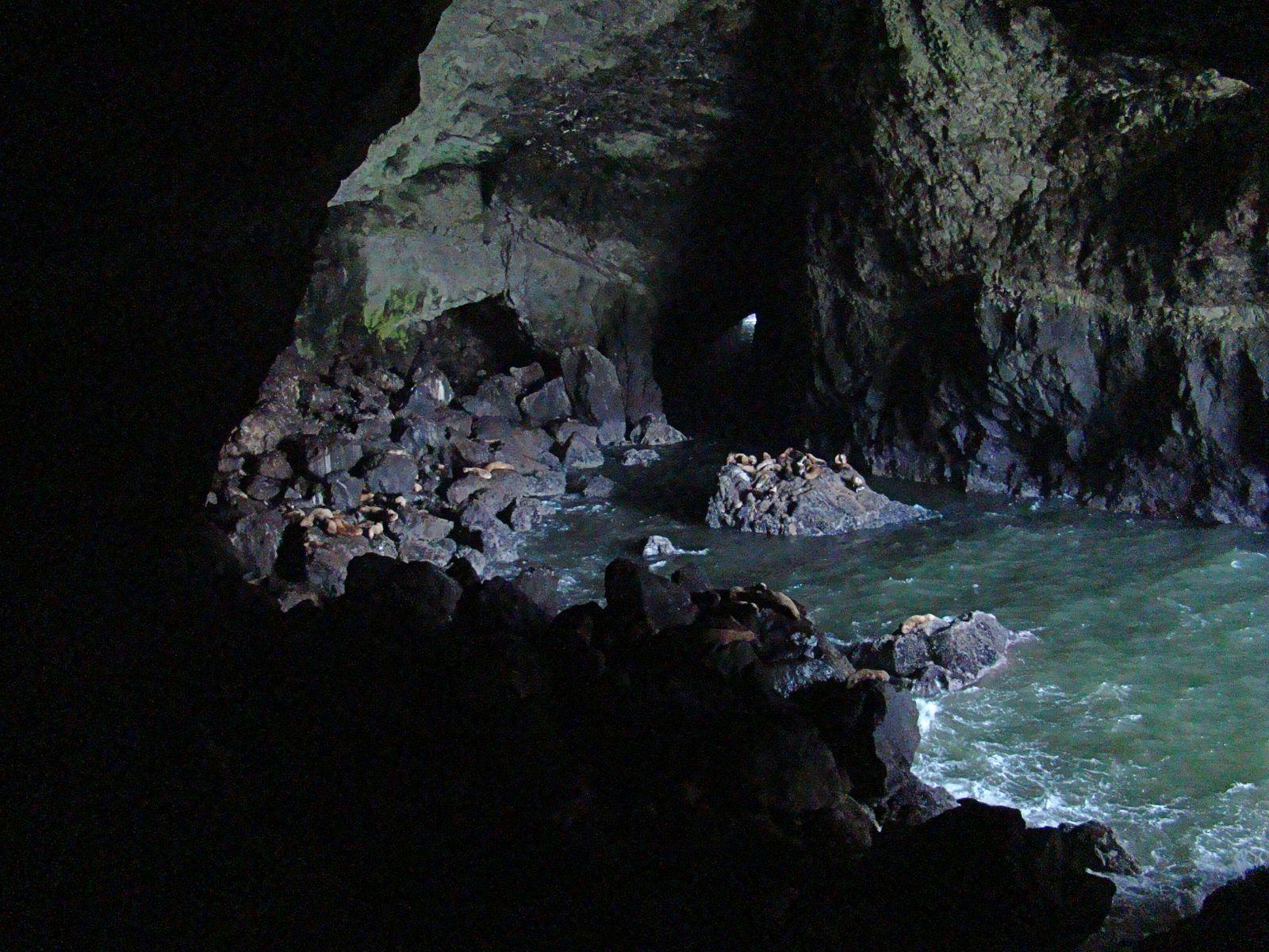 Reisverslag Amerika 2010: Dag 14: Sea Lion Caves