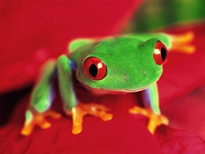 25_frogs_35448.jpg