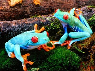 33_frogs_93294.jpg