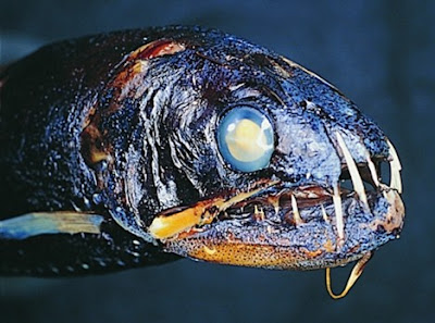Most Rare Fishes in the World « Flickzzz