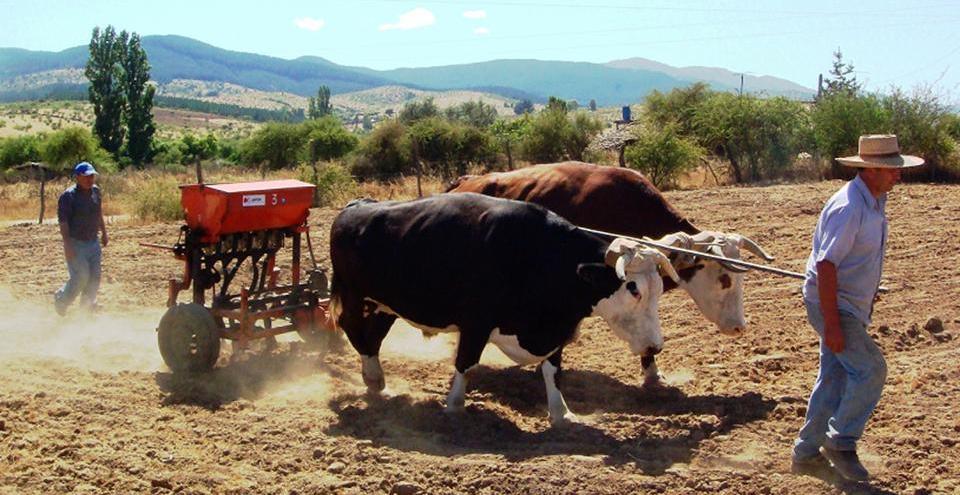 Visi n agroecol gica medidas de conservaci n de suelos for Materiales que forman el suelo