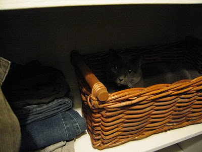 cat in basket in closet