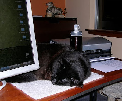 black cat on home office desk