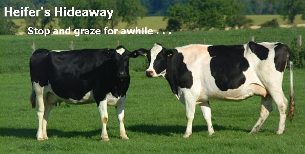 Heifers' Hideaway