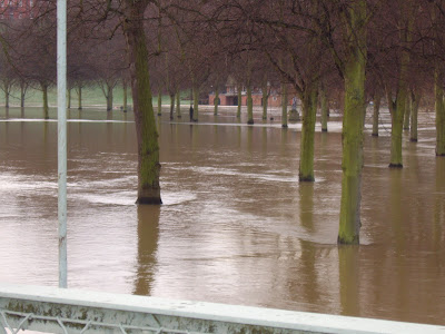 photogrphs of trees surrounded by river water in shrewsbury