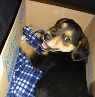 Toby, 20 July 2007