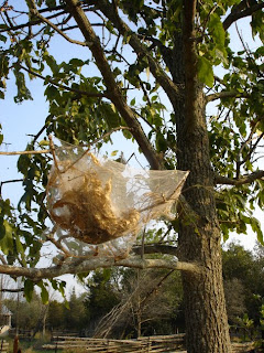 Fall Webworm web