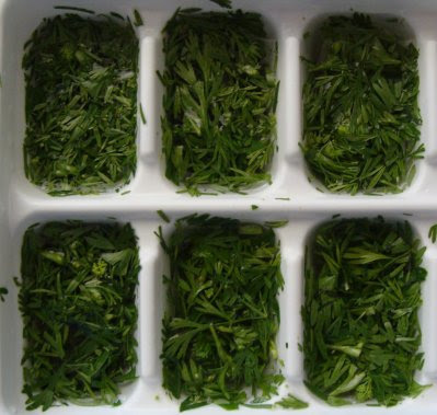 Chopped coriander/cilantro ready for freezing