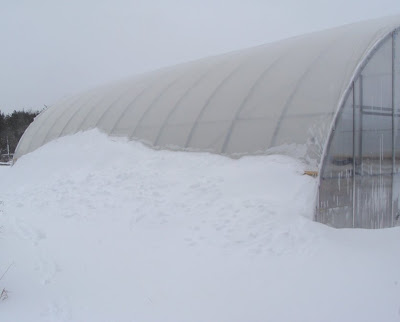 Greenhouse half buried in snow