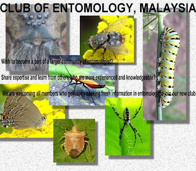 how to become an entomologist