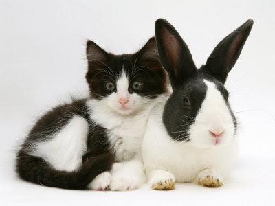 dolce vita: Kitten and Rabbit Look-a-likes