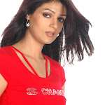 Hot Telegu Actress Poonam Singar