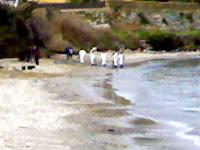 Limpieza de la Playa del Chinarral