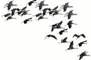 Aves del Estrecho