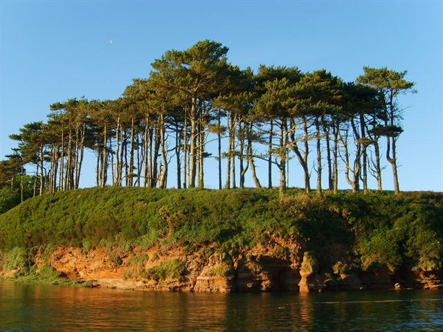 [BudleighTrees]