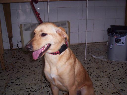 PIPI, adoptada 2010!