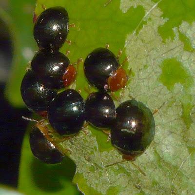 Alan's Wildlife: Beetles Bite, Bugs Sux