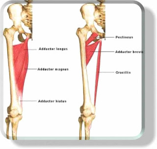 Daily Fitness For Life: Adductor - Inner thigh stretching