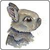 Bunny Head Coaster