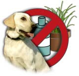 Preventing Pet Poisoning