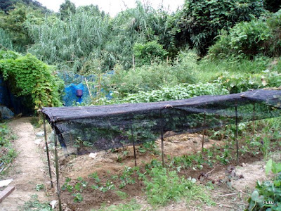60過ぎの日々 家庭菜園畑の作業...