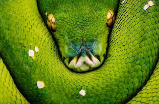 national geographic moments 24
