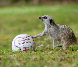 animals also play football02