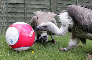 animals also play football07