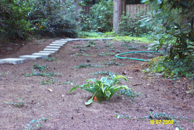 Site Blogspot  Front Yard Landscaping on Singleton Family  Re Landscaping Front Yard